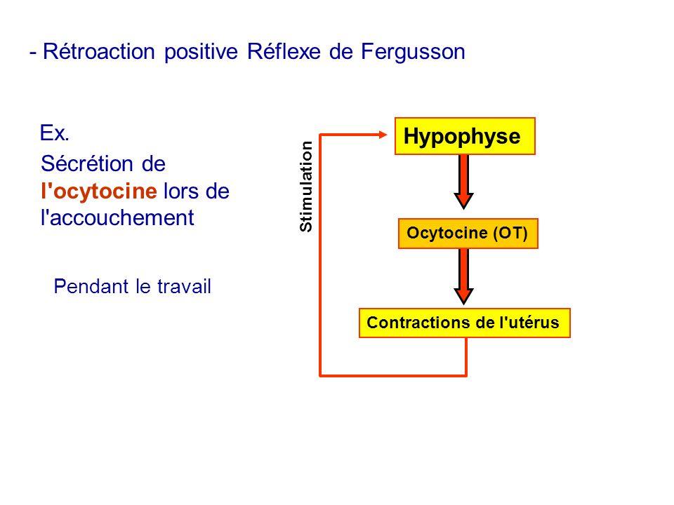 - Rétroaction positive Réflexe de Fergusson