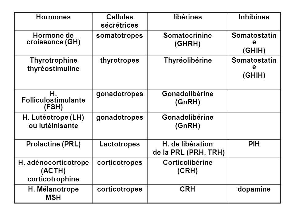 Hormone de croissance (GH) H. Folliculostimulante (FSH)
