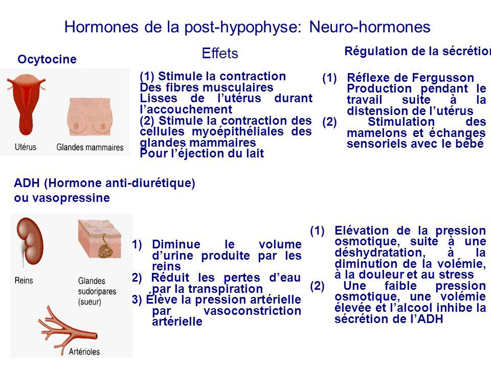 Hormones de la post-hypophyse: Neuro-hormones