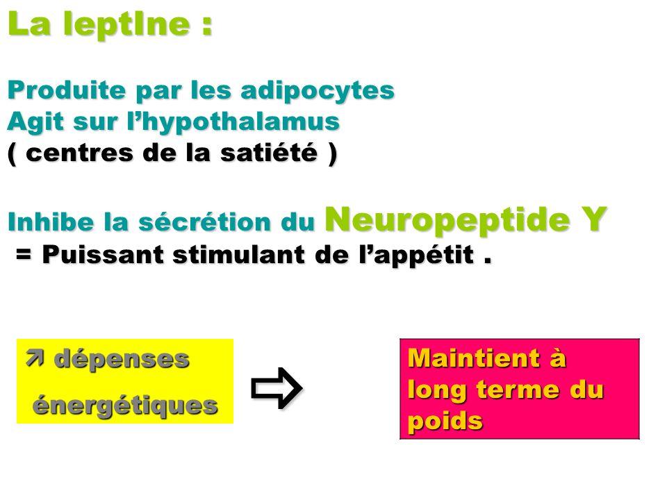  La leptIne : Produite par les adipocytes Agit sur l'hypothalamus