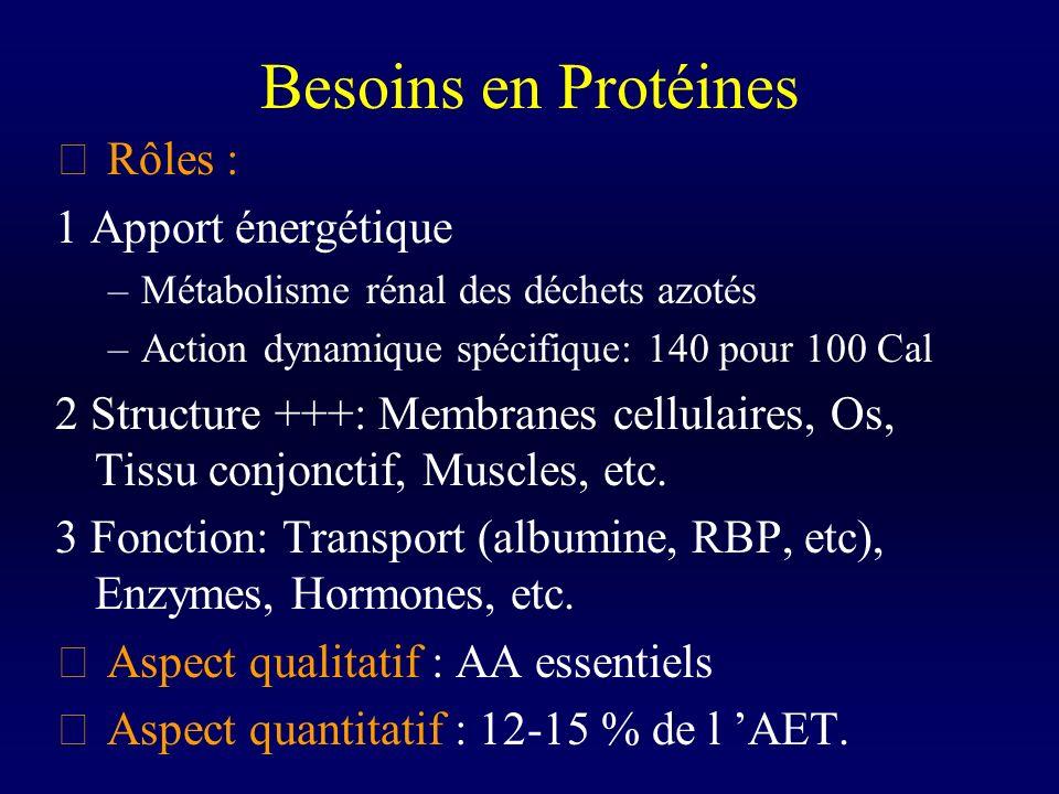 Besoins en Protéines Rôles : 1 Apport énergétique
