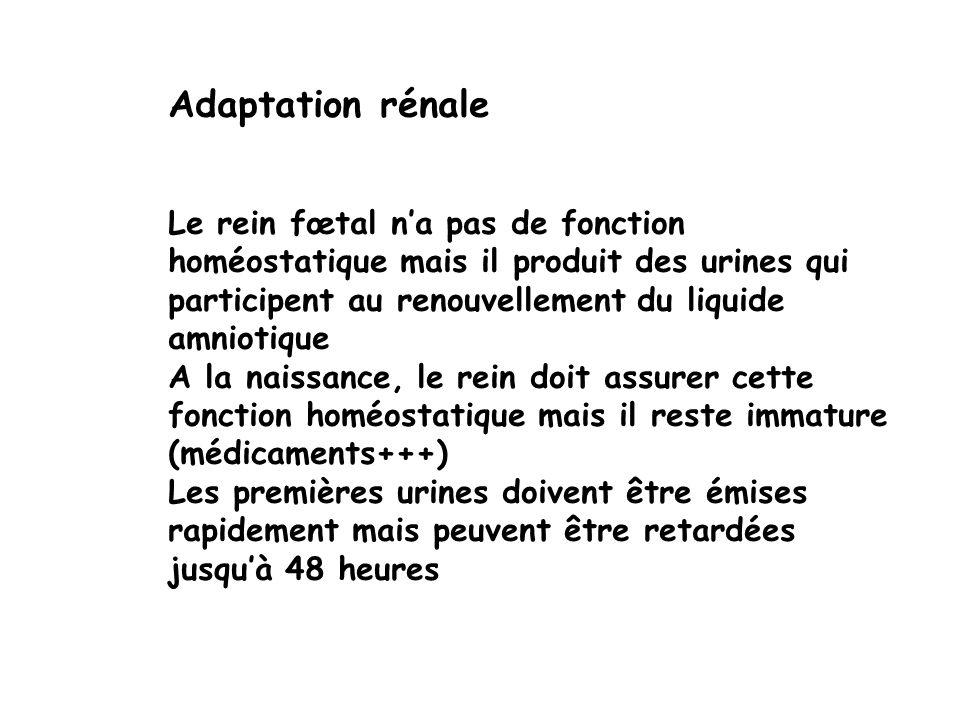 Adaptation rénale Le rein fœtal n'a pas de fonction homéostatique mais il produit des urines qui participent au renouvellement du liquide amniotique.