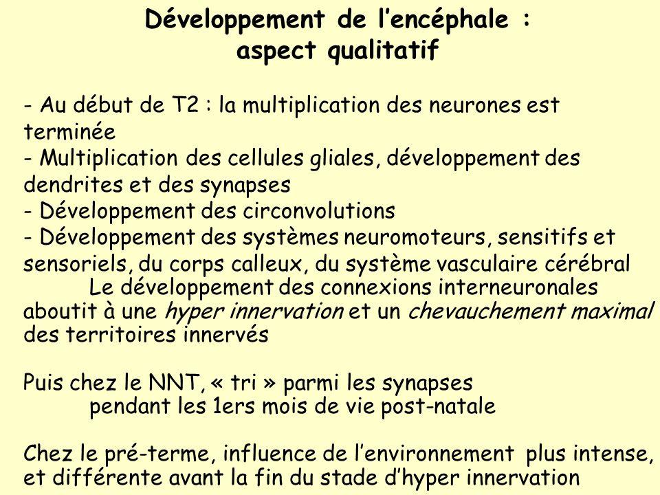 Développement de l'encéphale : aspect qualitatif