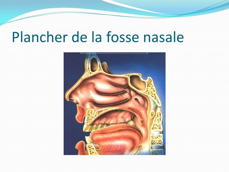 Plancher de la fosse nasale