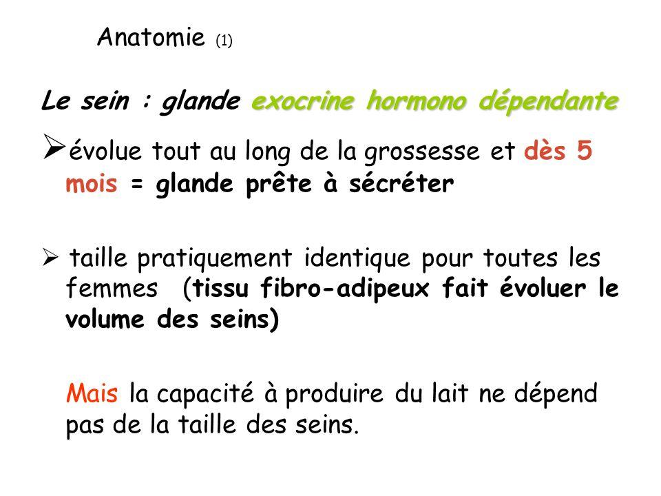 Anatomie (1) Le sein : glande exocrine hormono dépendante. évolue tout au long de la grossesse et dès 5 mois = glande prête à sécréter.
