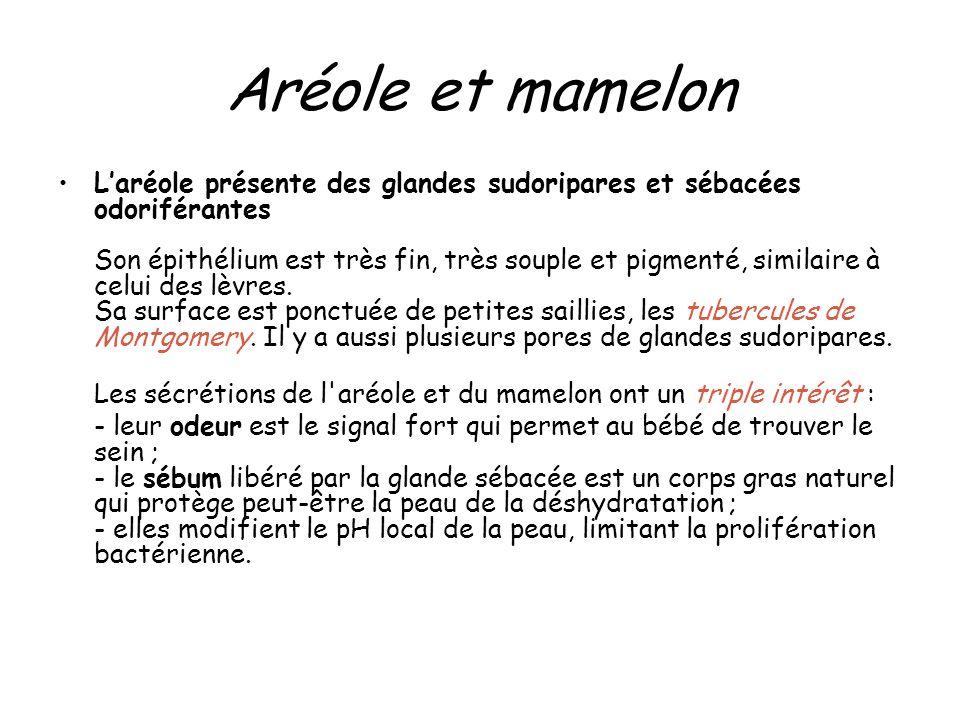 Aréole et mamelon