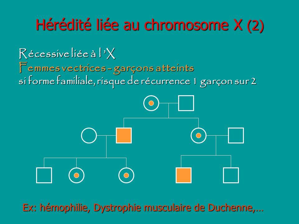 Hérédité liée au chromosome X (2)