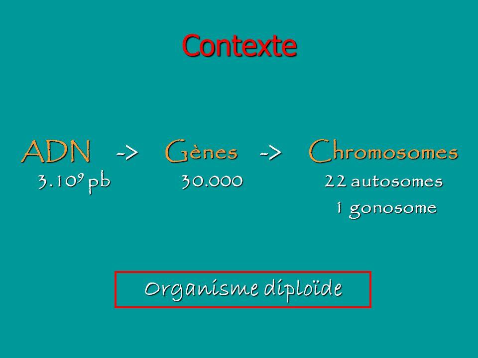 ADN -> Gènes -> Chromosomes