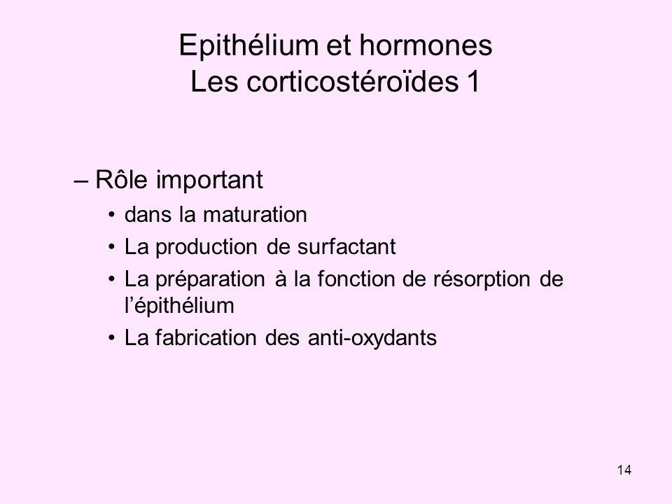 Epithélium et hormones Les corticostéroïdes 1