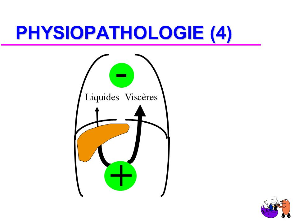 PHYSIOPATHOLOGIE (4) - + Liquides Viscères