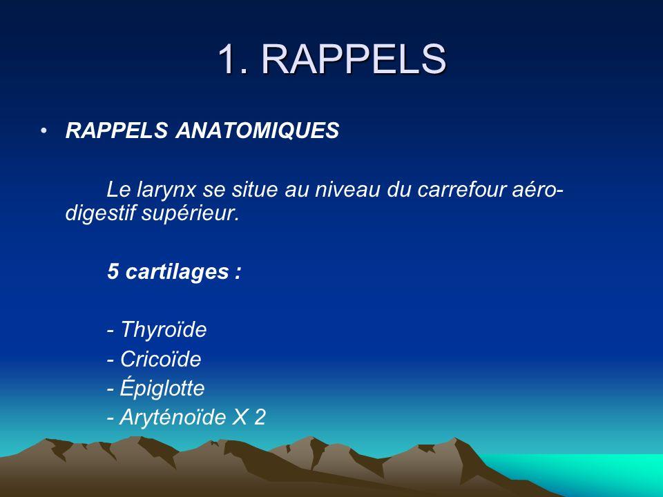1. RAPPELS RAPPELS ANATOMIQUES