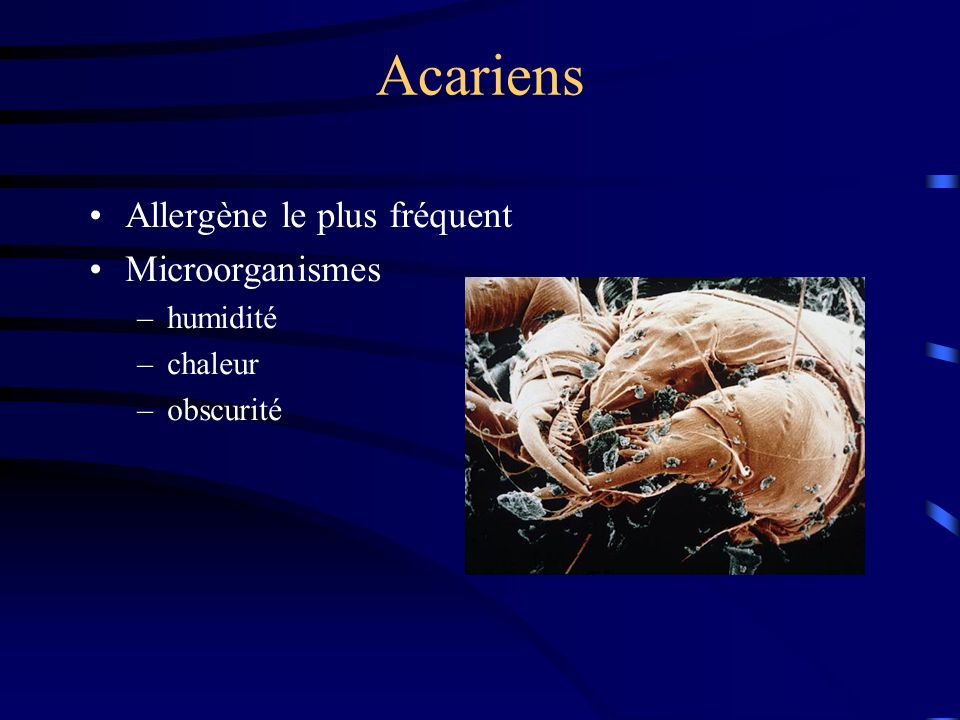Acariens Allergène le plus fréquent Microorganismes humidité chaleur