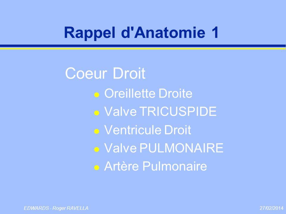 Rappel d Anatomie 1 Coeur Droit Oreillette Droite Valve TRICUSPIDE