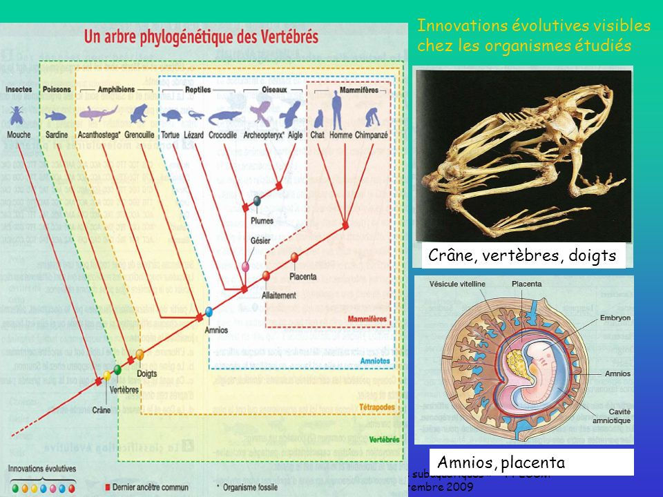 Innovations évolutives visibles chez les organismes étudiés