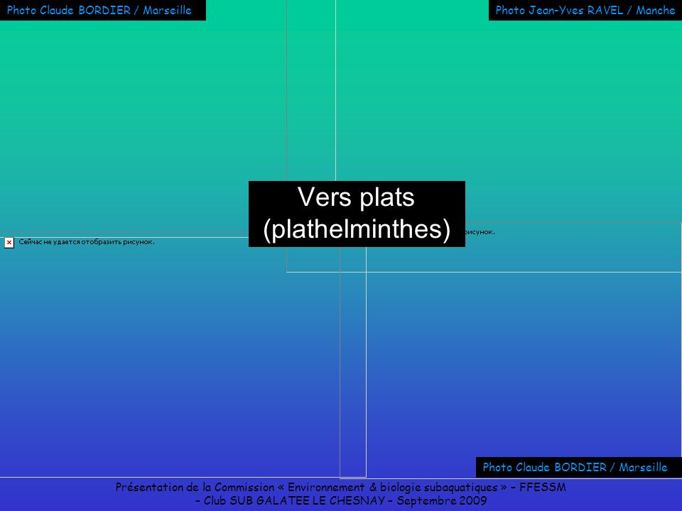 Vers plats (plathelminthes)