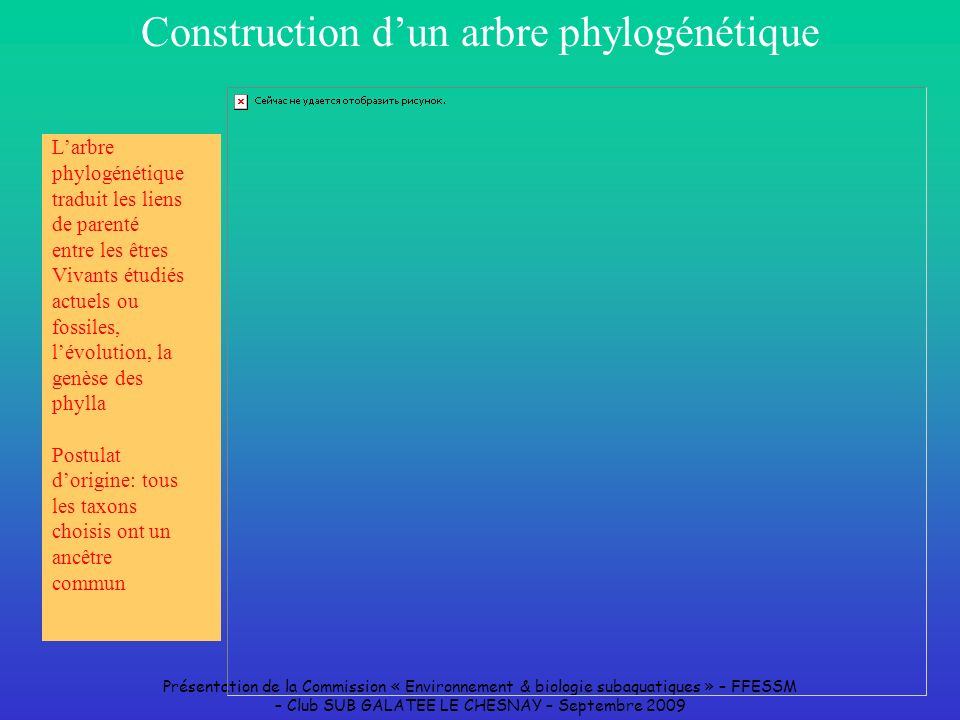Construction d'un arbre phylogénétique