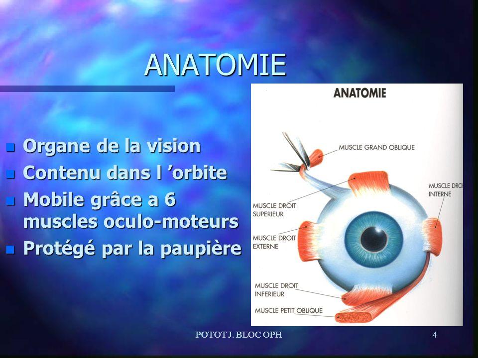 ANATOMIE Organe de la vision Contenu dans l 'orbite