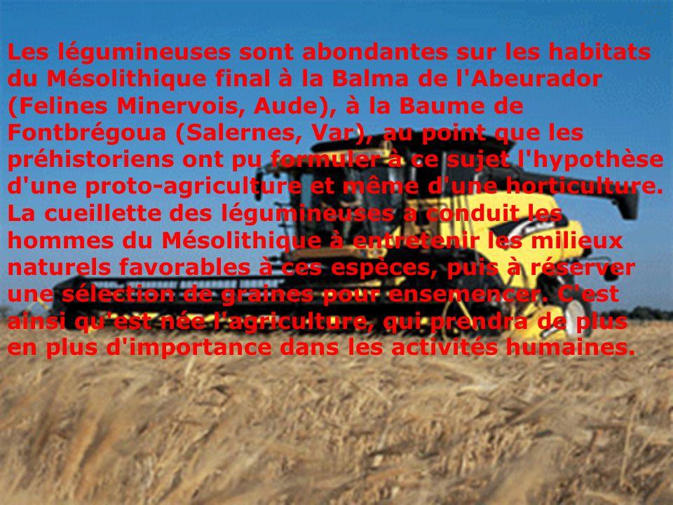 Les légumineuses sont abondantes sur les habitats du Mésolithique final à la Balma de l Abeurador (Felines Minervois, Aude), à la Baume de Fontbrégoua (Salernes, Var), au point que les préhistoriens ont pu formuler à ce sujet l hypothèse d une proto-agriculture et même d une horticulture.