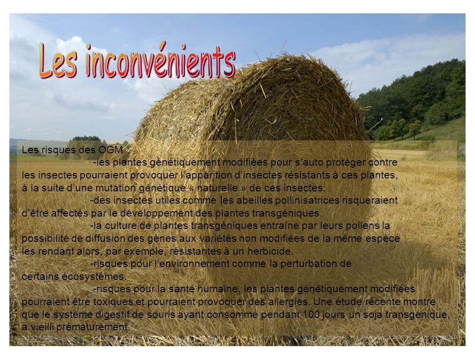 Les inconvénients Les risques des OGM :