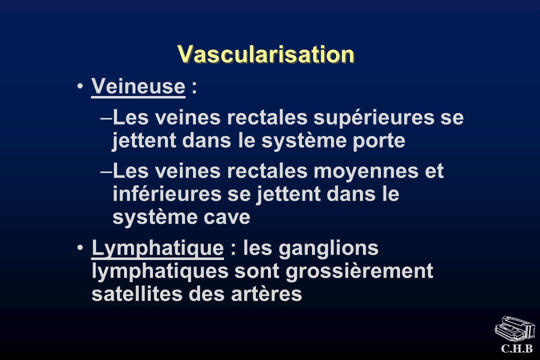 Vascularisation Veineuse :