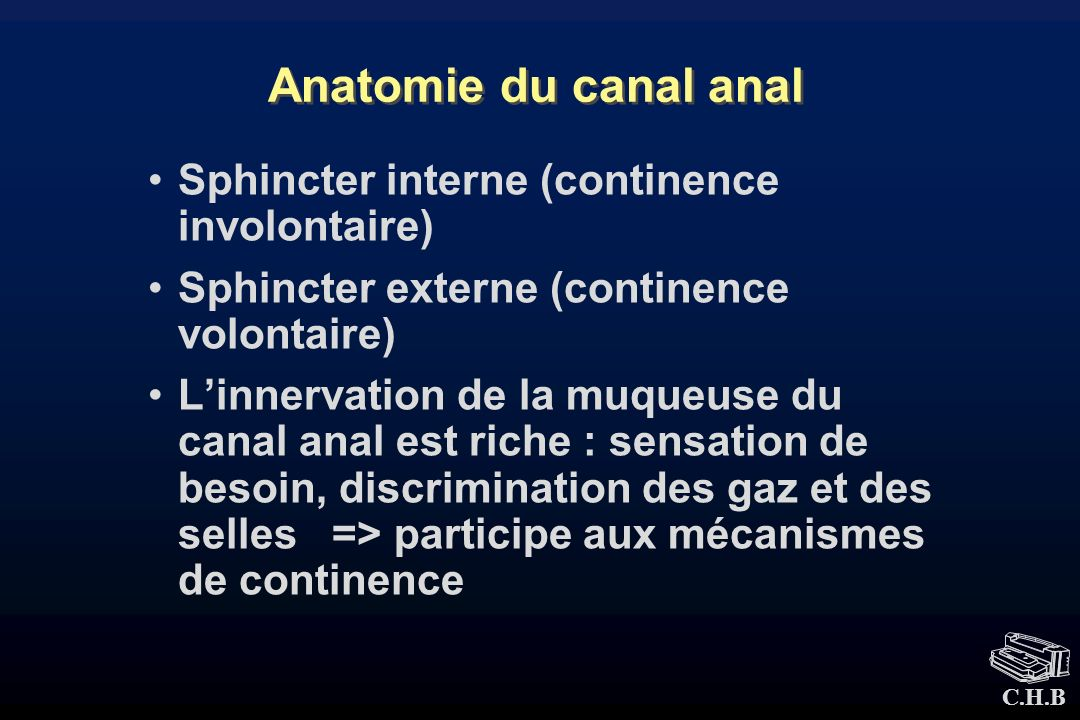 Anatomie du canal anal Sphincter interne (continence involontaire)