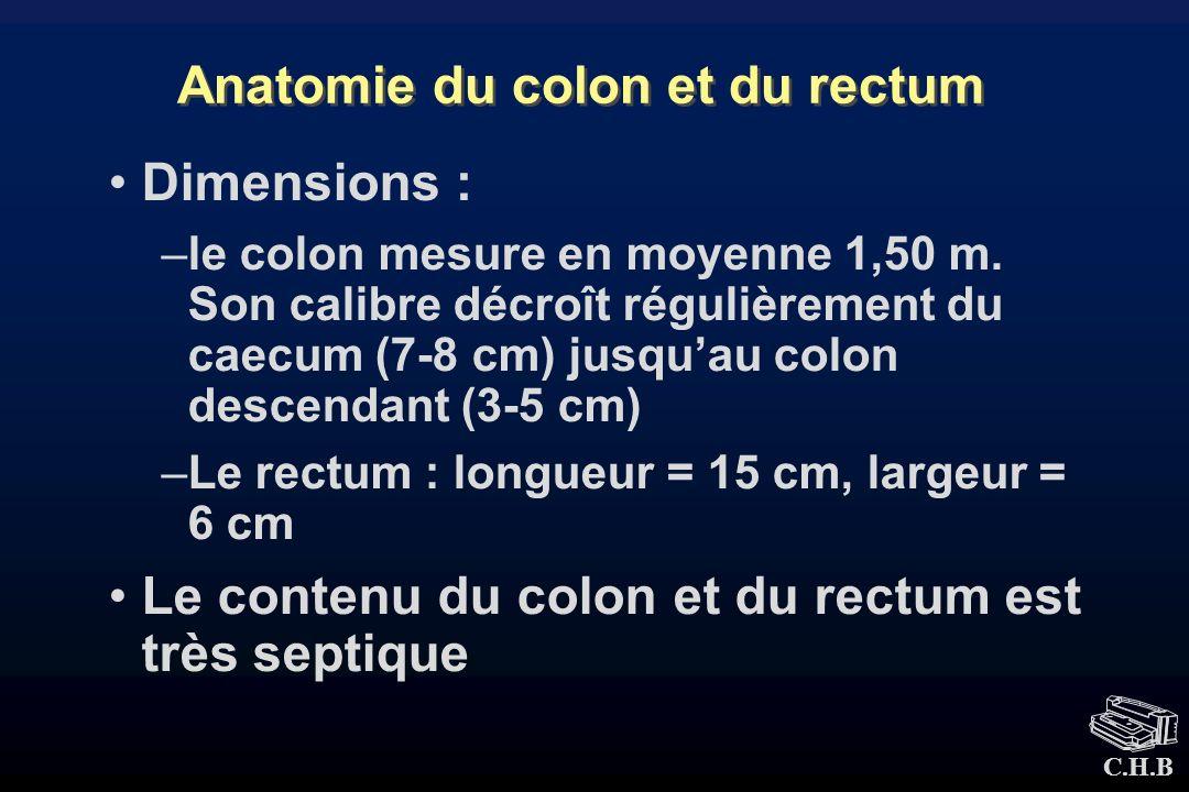 Anatomie du colon et du rectum