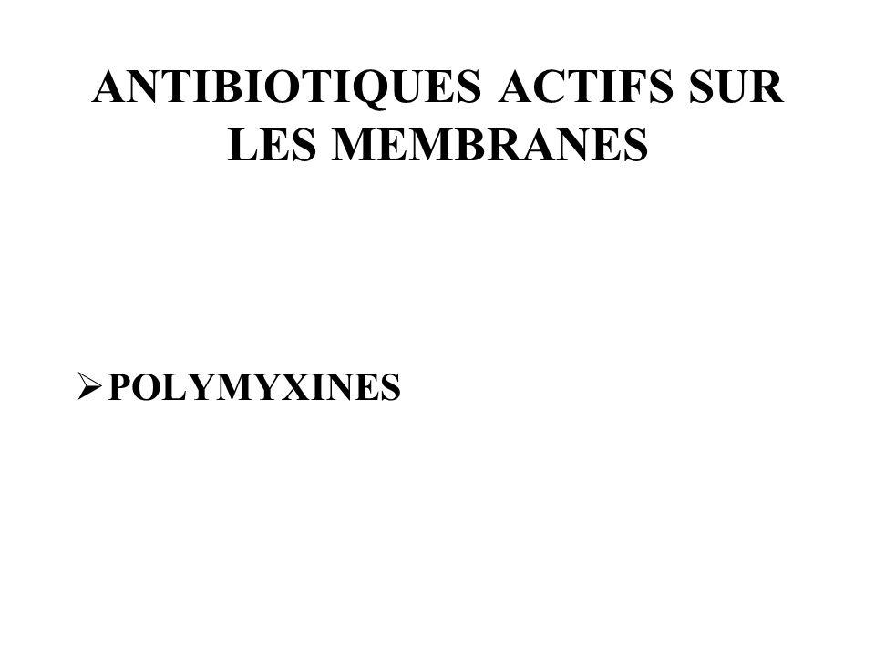 ANTIBIOTIQUES ACTIFS SUR LES MEMBRANES