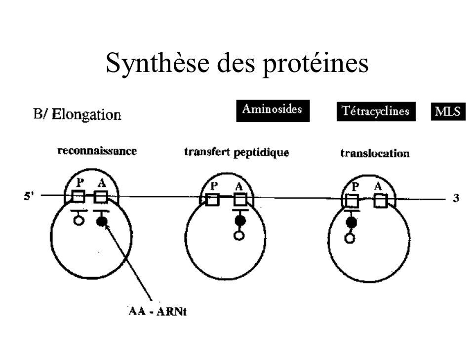 Synthèse des protéines
