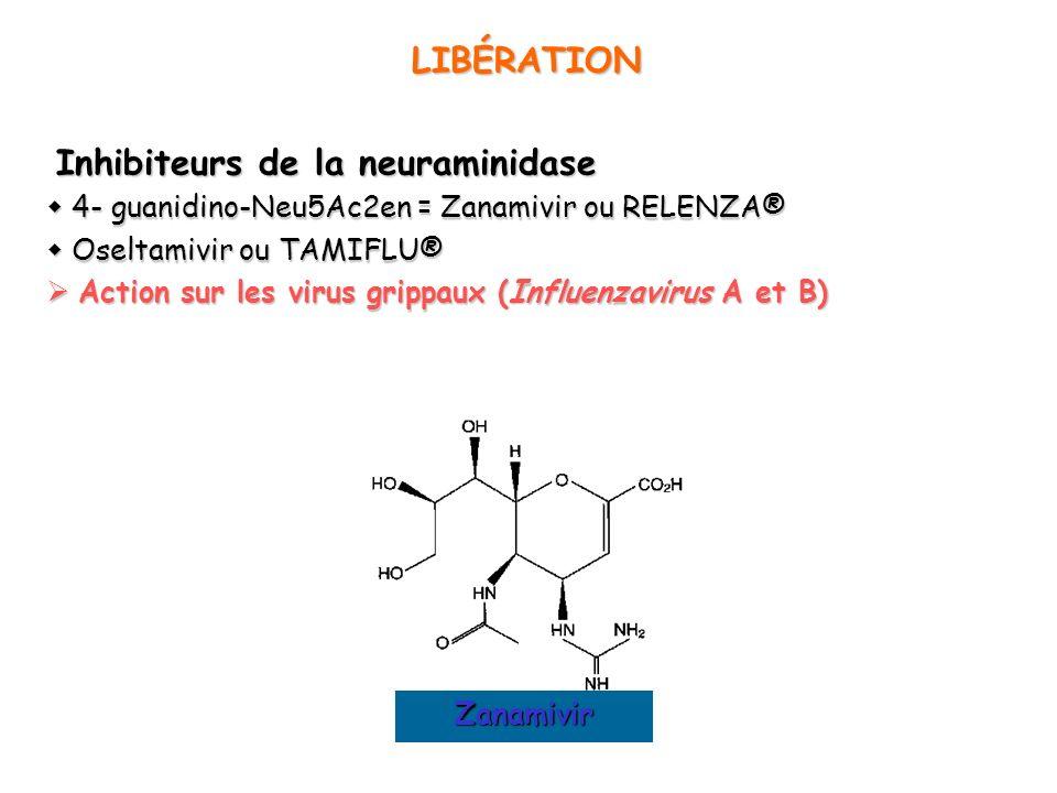 Inhibiteurs de la neuraminidase