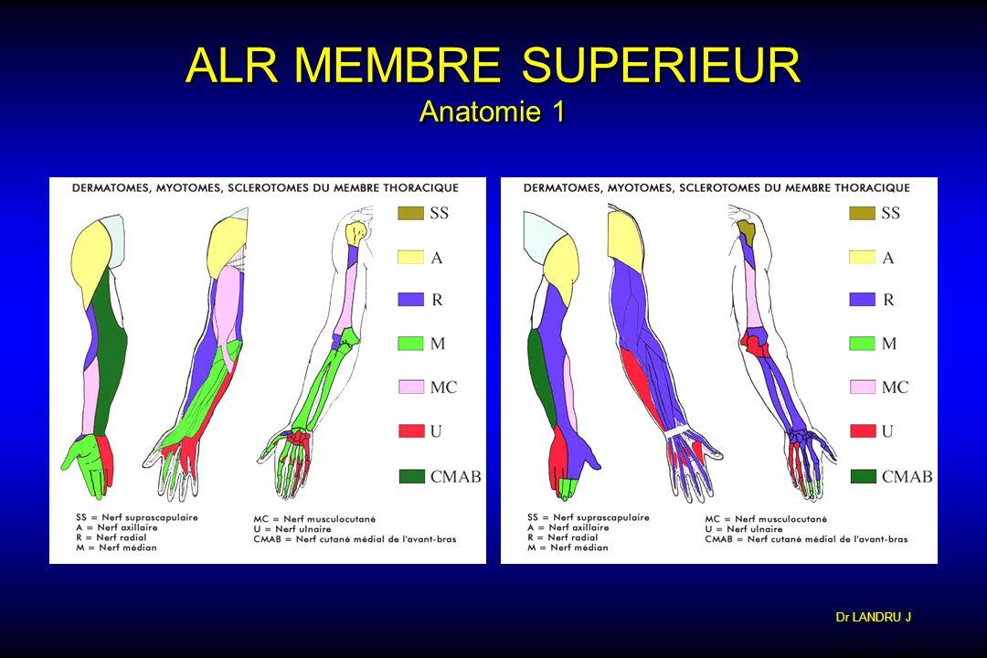 ALR MEMBRE SUPERIEUR Anatomie 1
