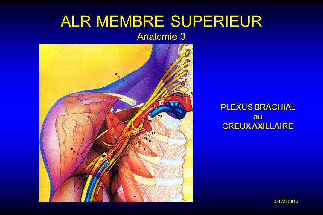ALR MEMBRE SUPERIEUR Anatomie 3