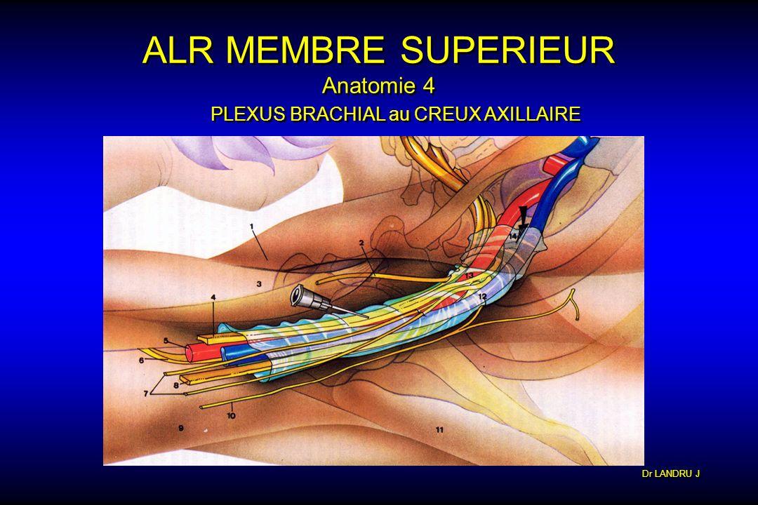 ALR MEMBRE SUPERIEUR Anatomie 4