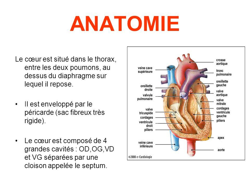 ANATOMIE Le cœur est situé dans le thorax, entre les deux poumons, au dessus du diaphragme sur lequel il repose.