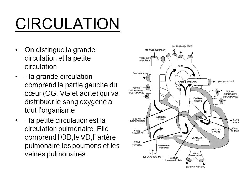 CIRCULATION On distingue la grande circulation et la petite circulation.