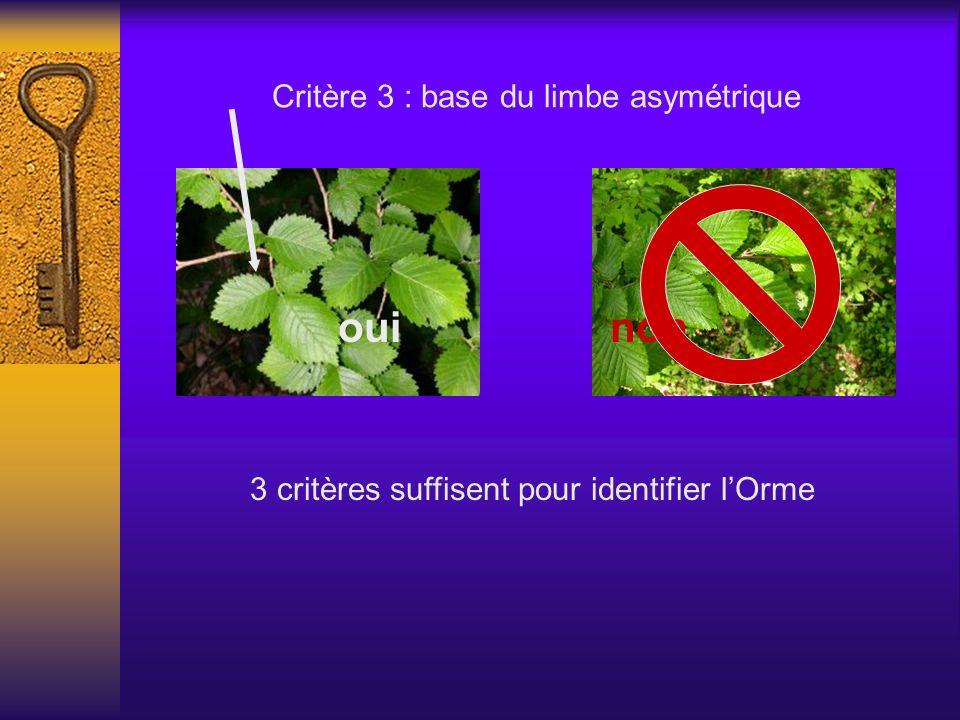 Critère 3 : base du limbe asymétrique