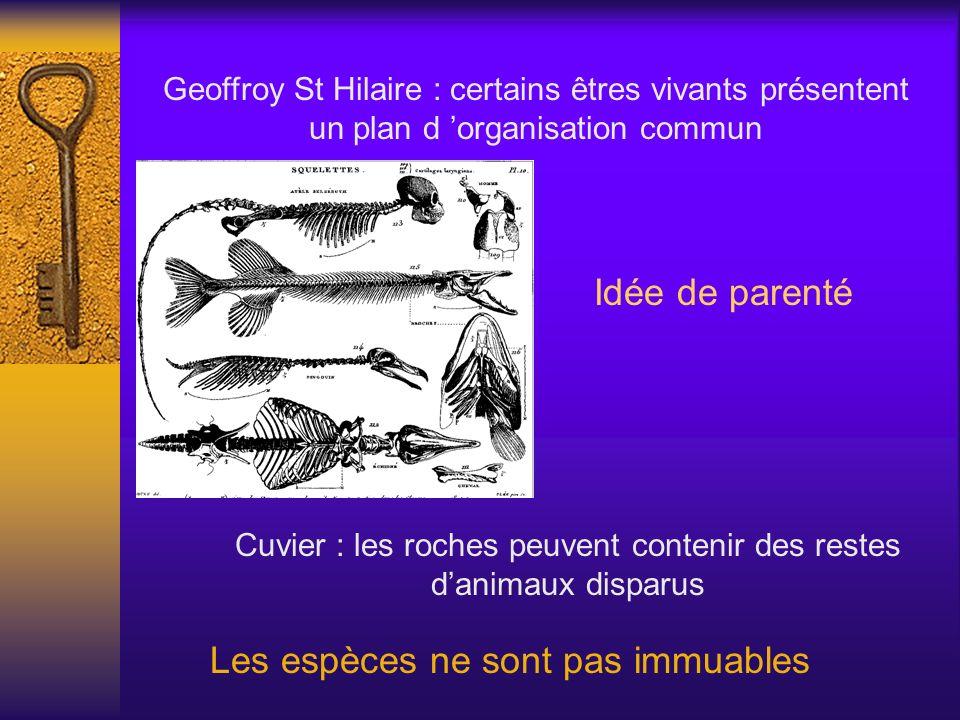 Cuvier : les roches peuvent contenir des restes d'animaux disparus