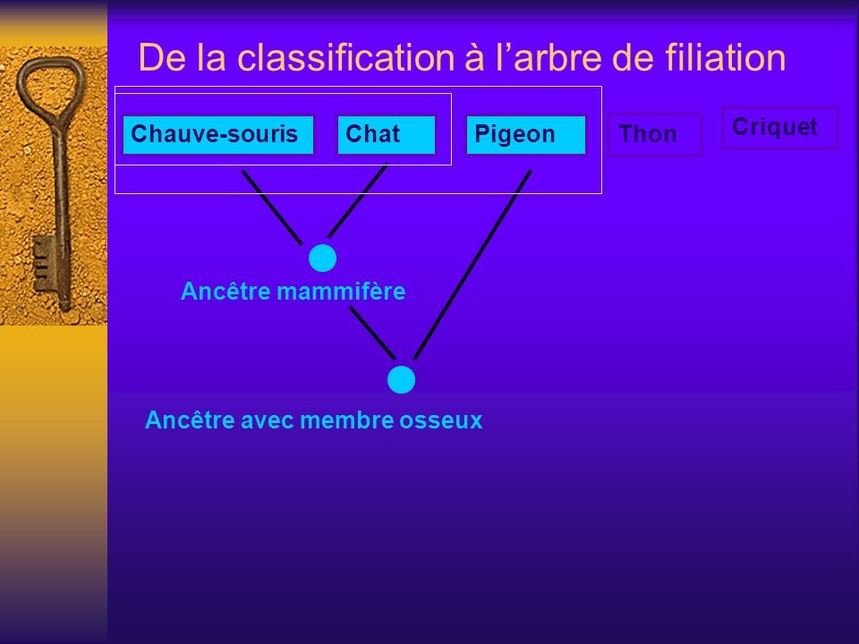 De la classification à l'arbre de filiation
