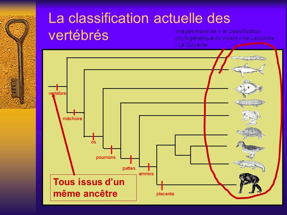 La classification actuelle des vertébrés