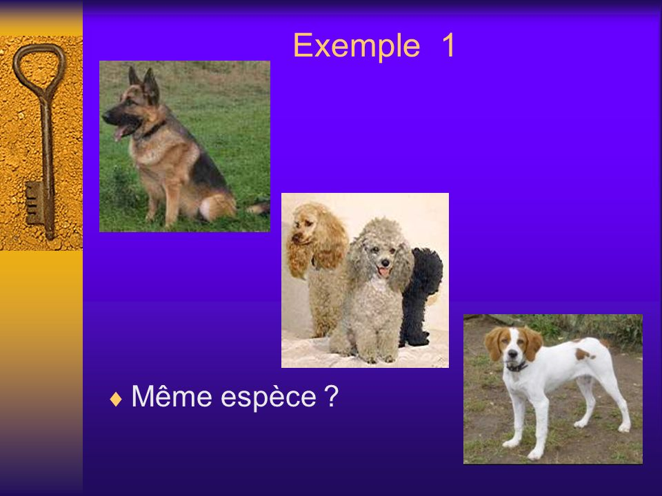 Exemple 1 Même espèce