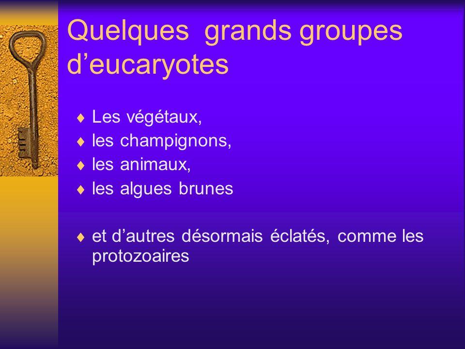Quelques grands groupes d'eucaryotes