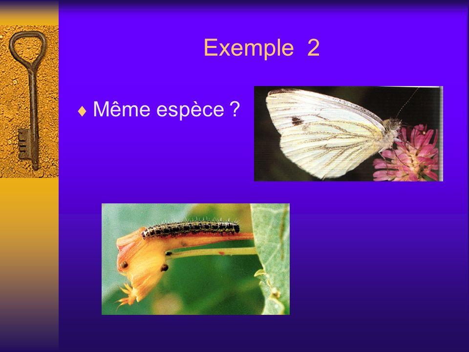 Exemple 2 Même espèce