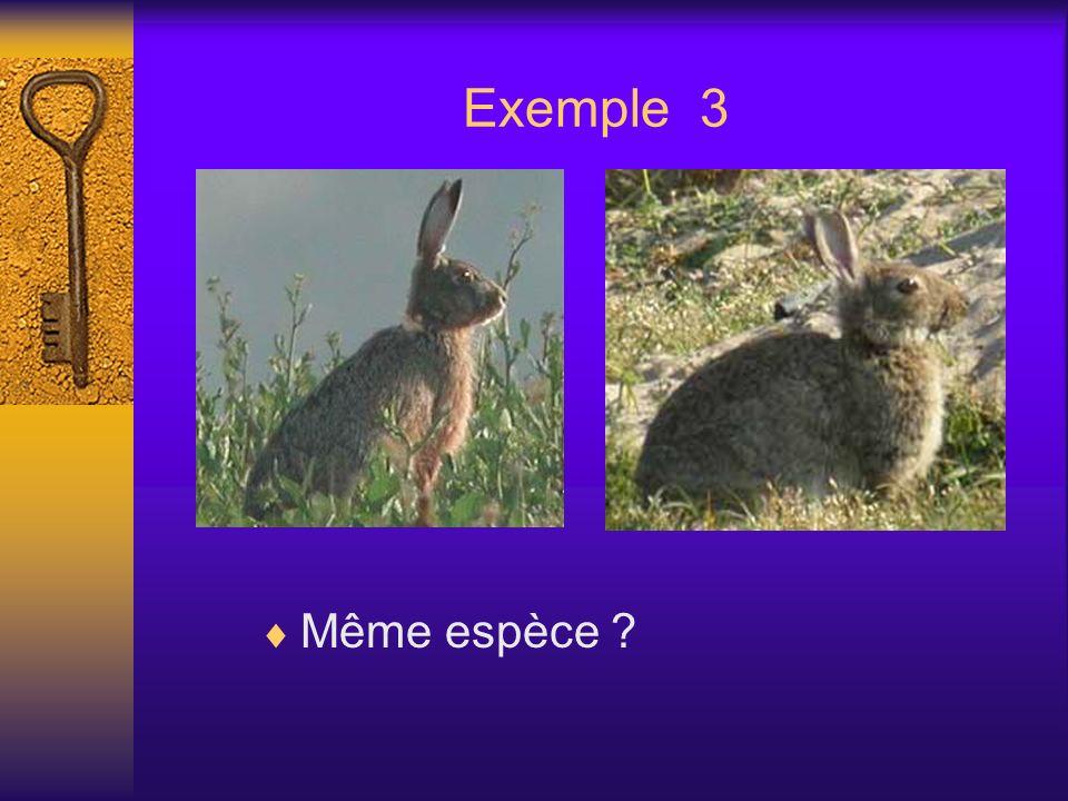 Exemple 3 Même espèce