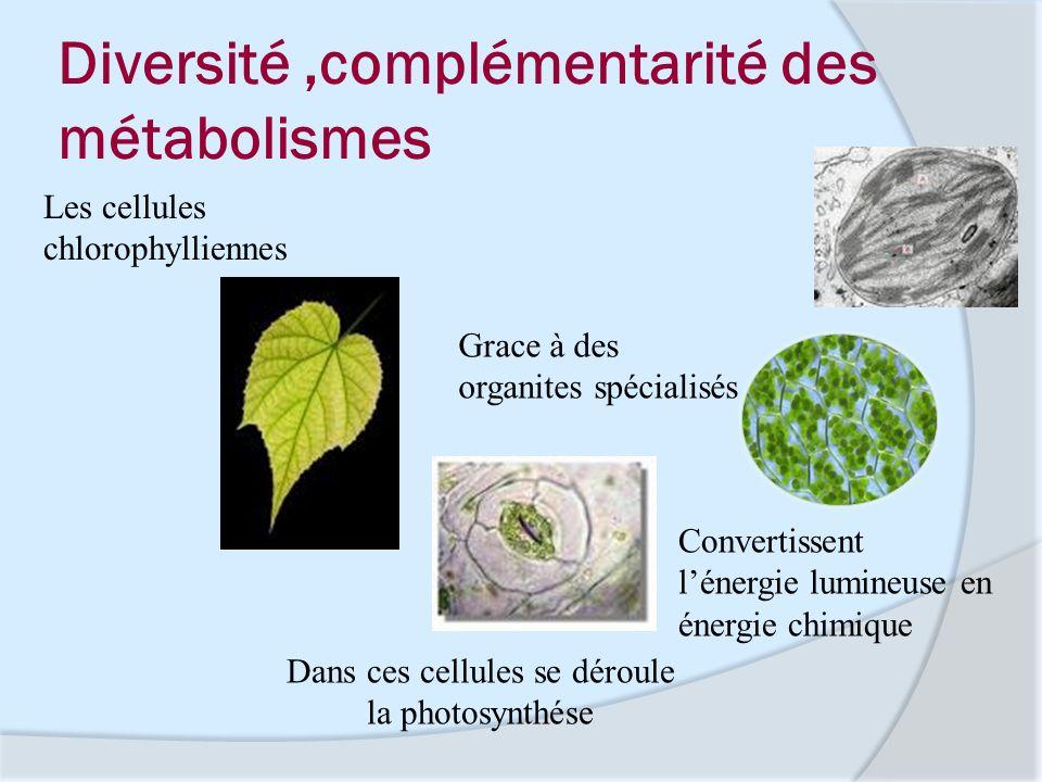 Diversité ,complémentarité des métabolismes