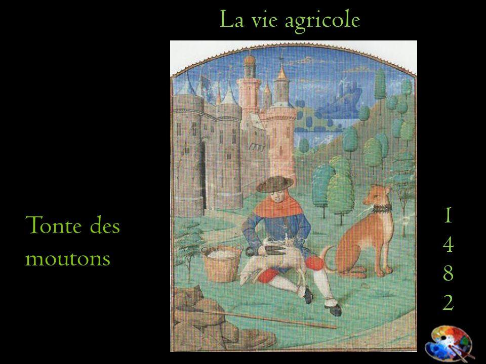 La vie agricole 1482 Tonte des moutons