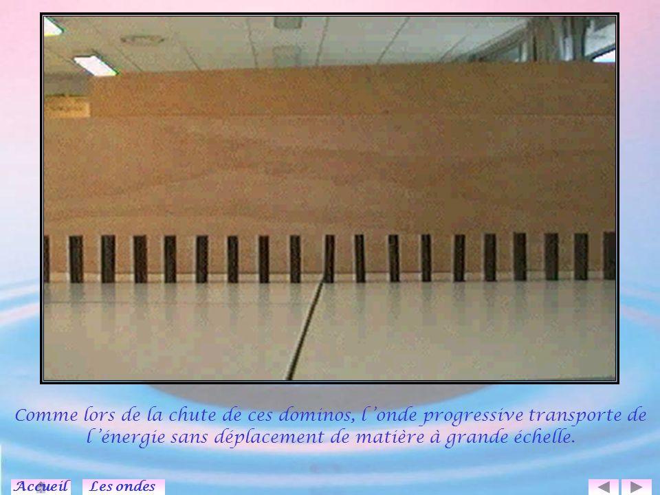Comme lors de la chute de ces dominos, l 'onde progressive transporte de l 'énergie sans déplacement de matière à grande échelle.