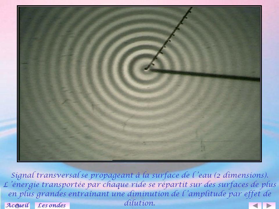 Signal transversal se propageant à la surface de l 'eau (2 dimensions)