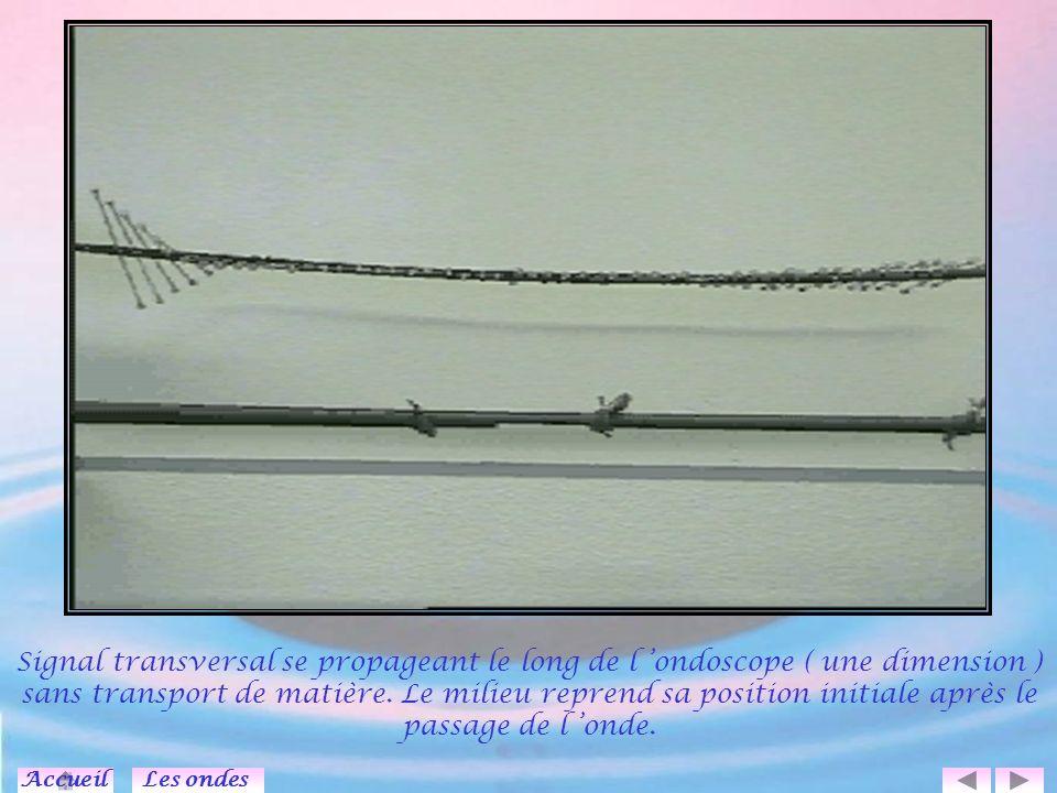Signal transversal se propageant le long de l 'ondoscope ( une dimension ) sans transport de matière. Le milieu reprend sa position initiale après le passage de l 'onde.