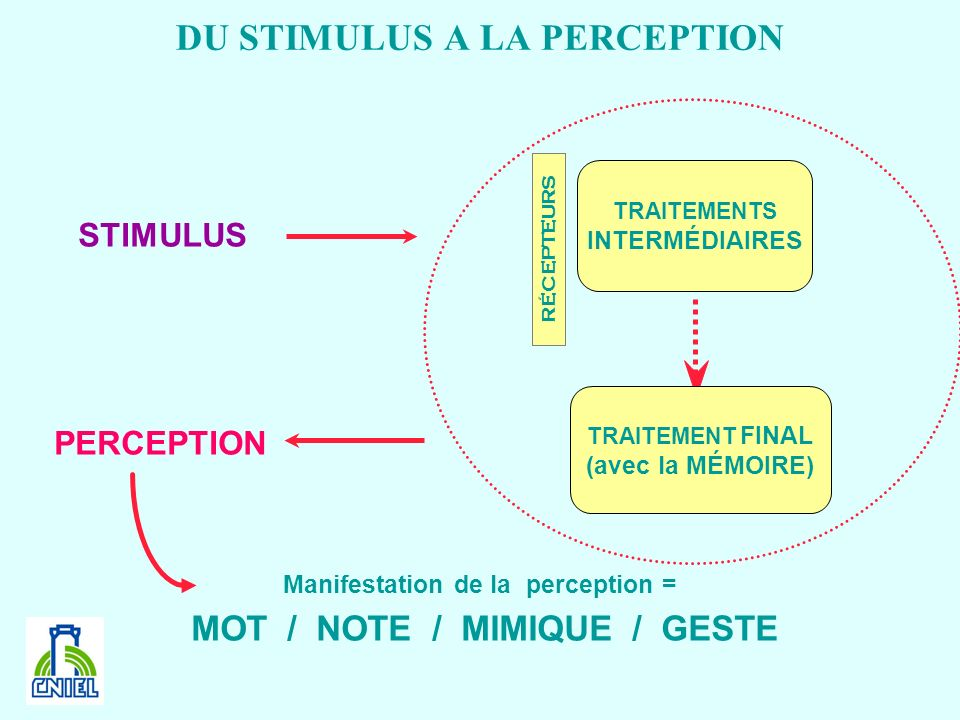 DU STIMULUS A LA PERCEPTION