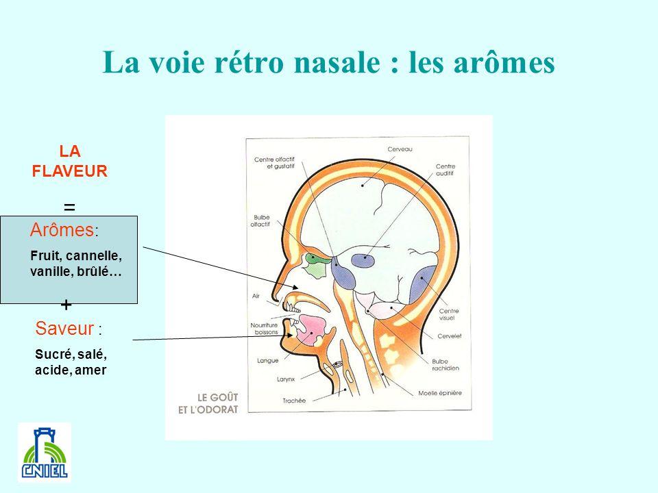 La voie rétro nasale : les arômes