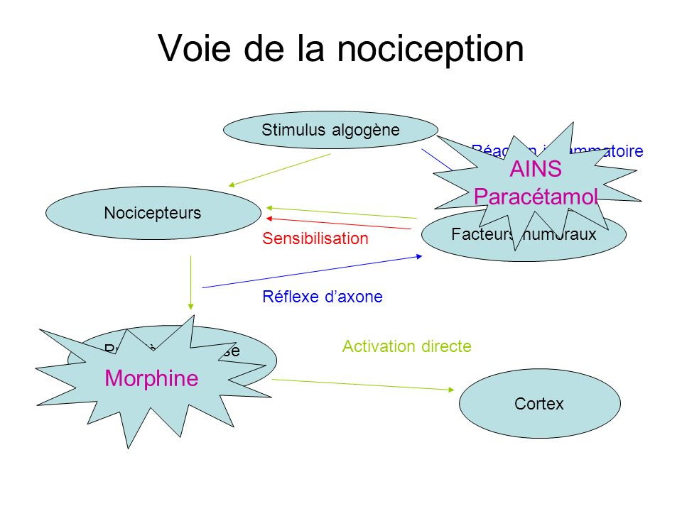Voie de la nociception AINS Paracétamol Morphine Stimulus algogène